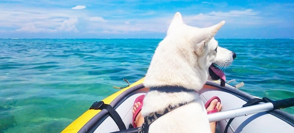 石垣島ダイビングショップ犬
